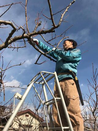 農作業ログ日記20161209桃の剪定
